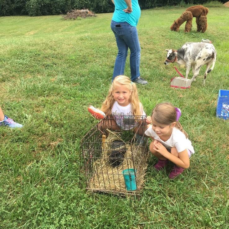 Petting Zoo Evelyn Caroline